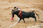 Corrida Bayonne 08 08_0065 S