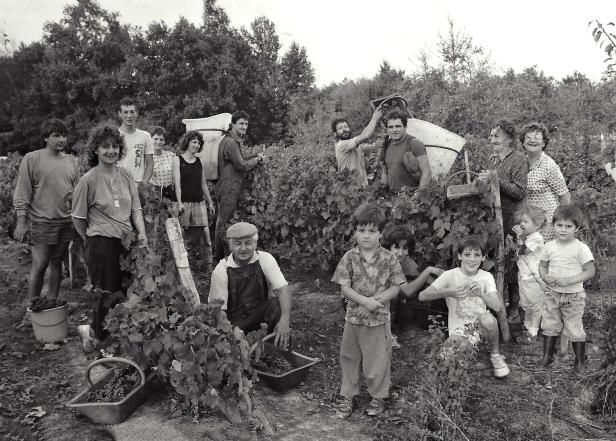 1980 famille jean Bireaud et autres vendangeurs