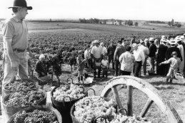 Ban des vendanges à St Astier 1994 (3)