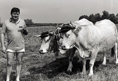 Les vaches dans nos campagnes 2